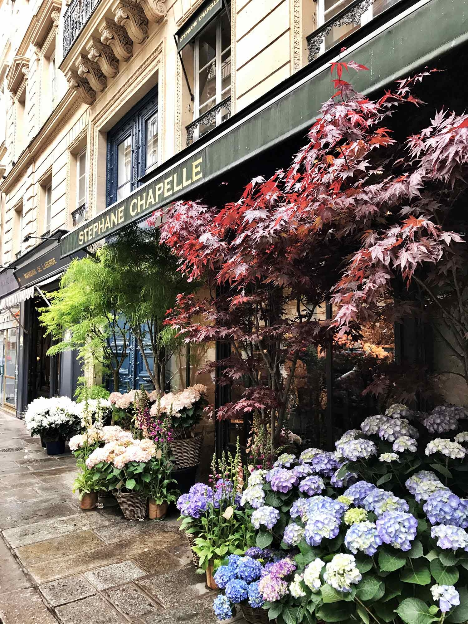 Potted flowers in full bloom line the streets of Paris