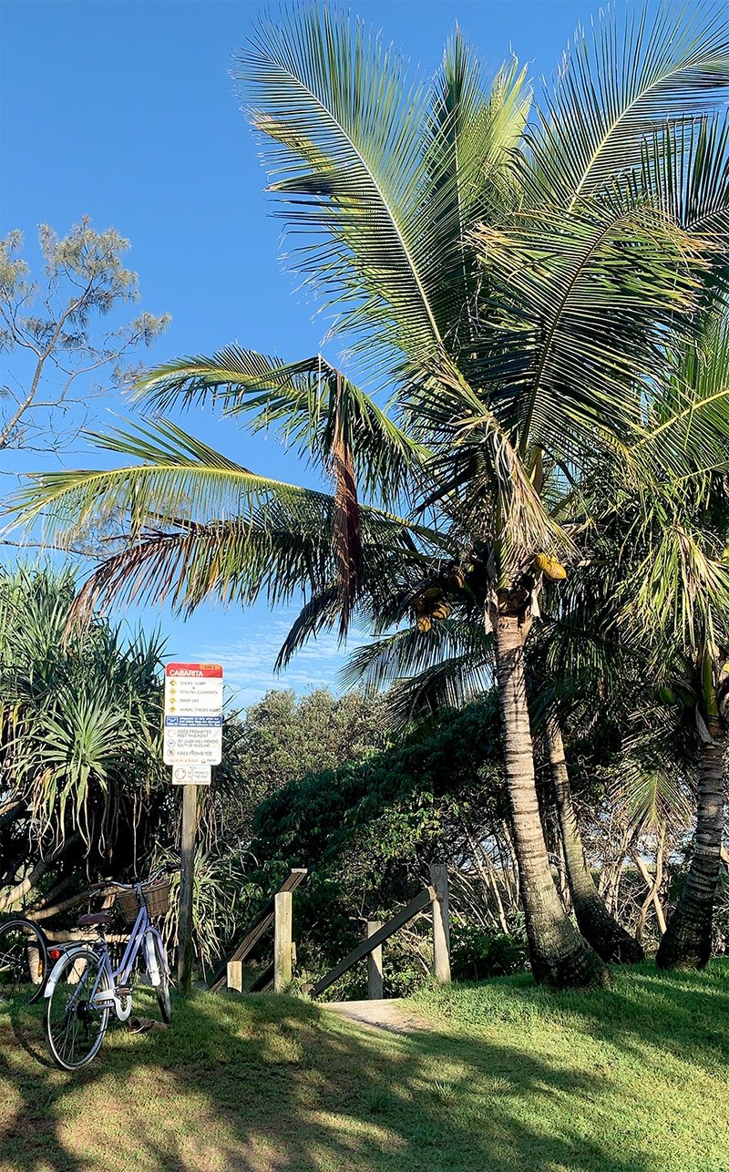 The entrance to Cabarita beach – a descending staircase, palm trees and native fauna line the border between sand and grass