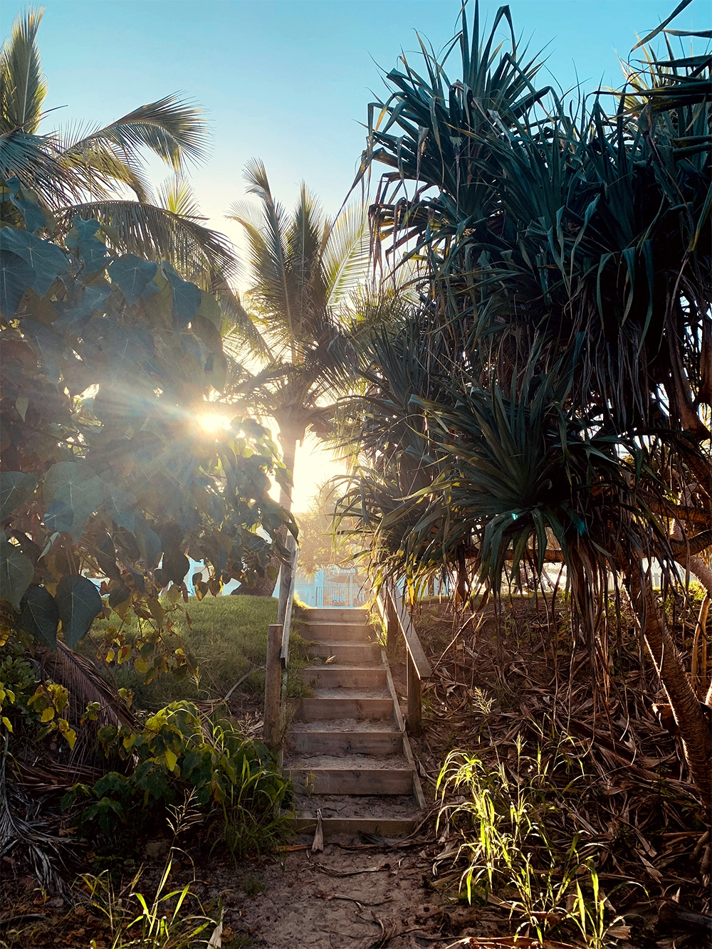 The sun peaks through the trees as it rises over a small staircase and native plants