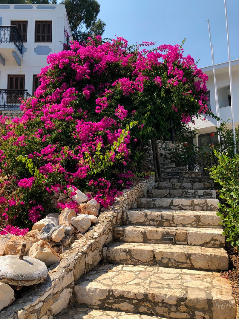 An ascending stone staircase lined with vibrant pink bougainvillea bushes