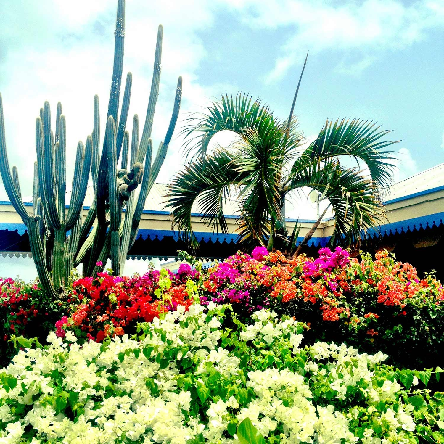 Bright flower bushes, large cactus and tall palm trees