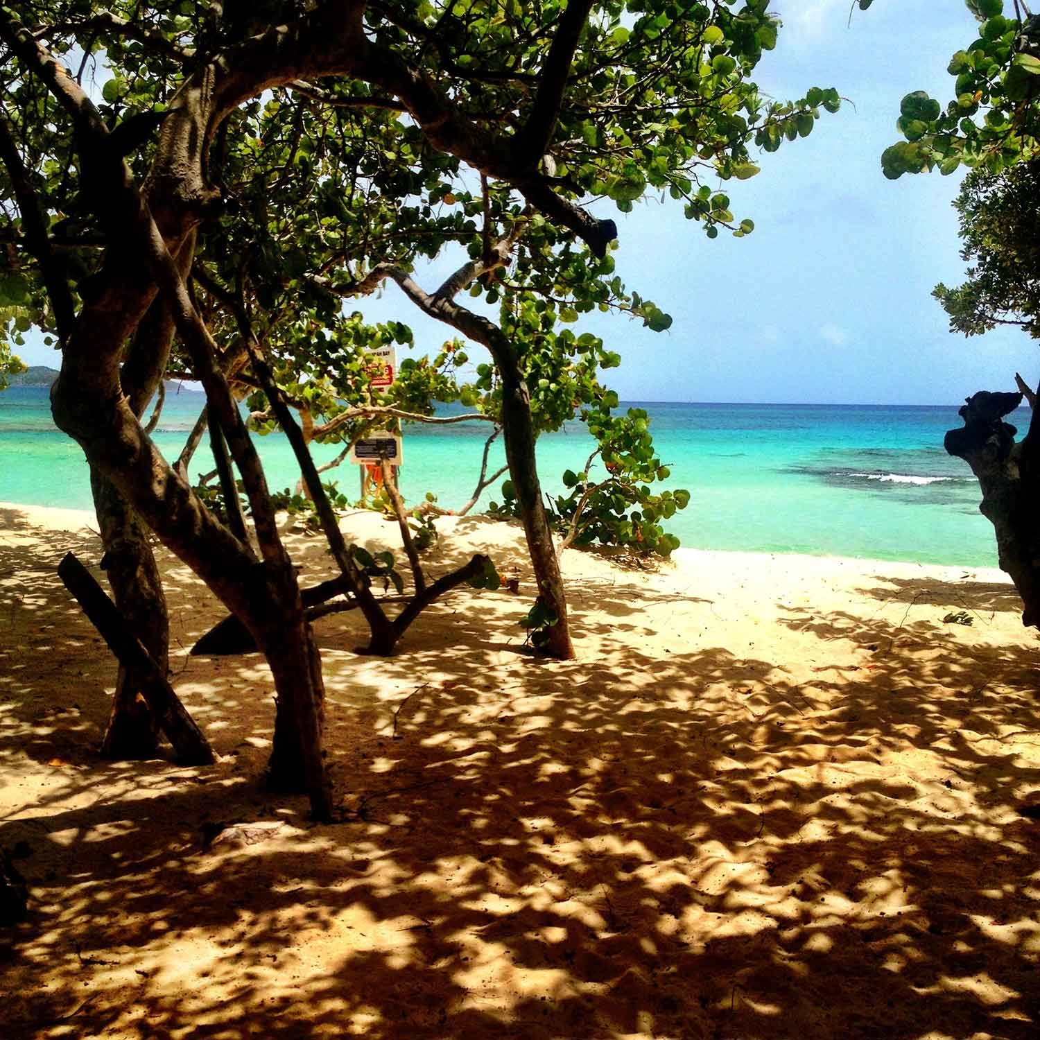 Amongst the shade of the trees on the sand just before the water's edge