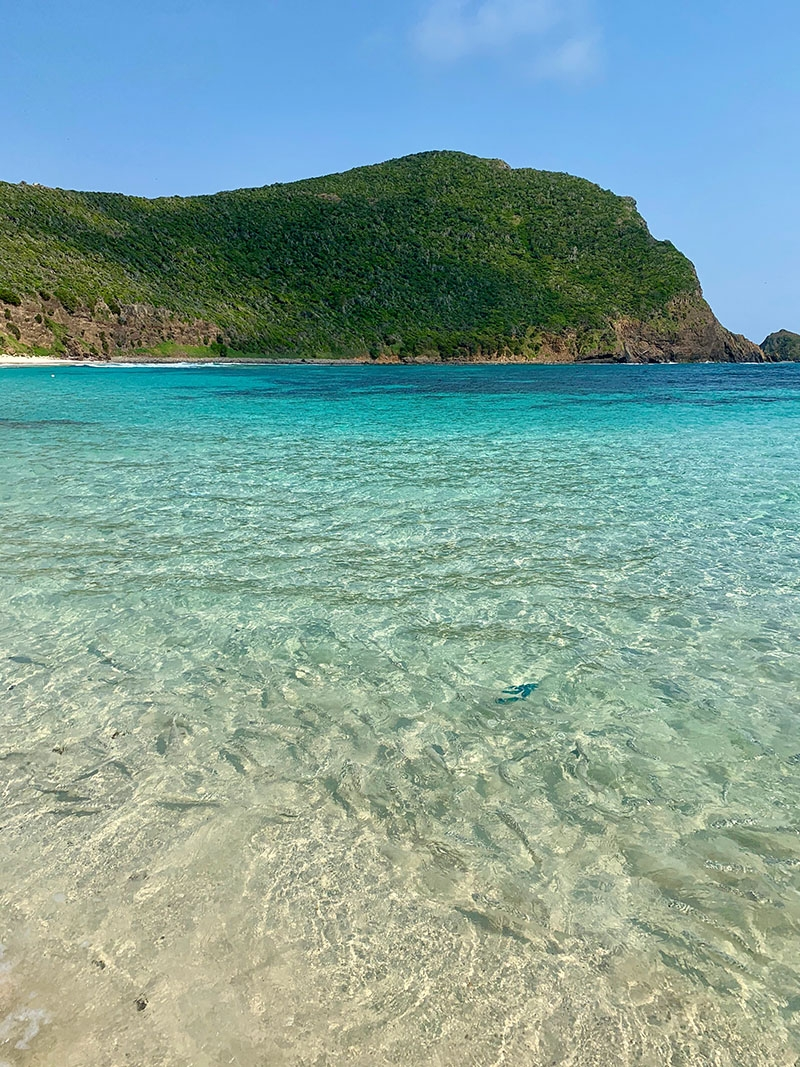 Clear blue waters and a school of fish on Lord Howe Island, the location for our Summer Swim 20 campaign