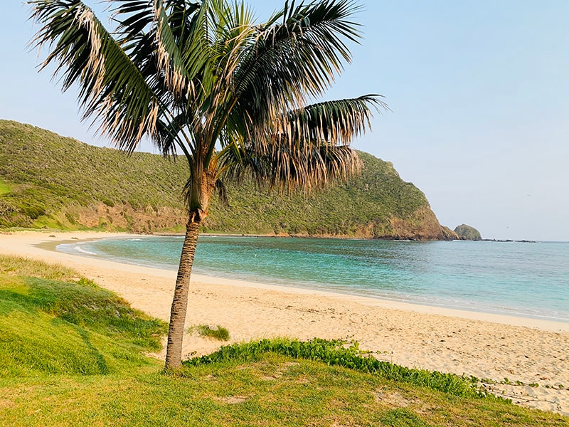 A Palm Tree at Ned's Beach, on Lord Howe Island