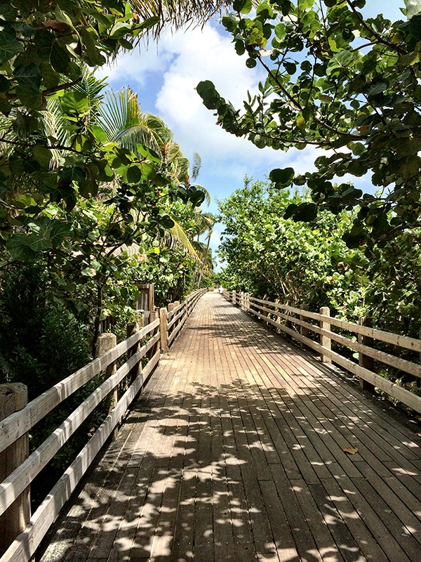A wooden boardwalk through dense green trees