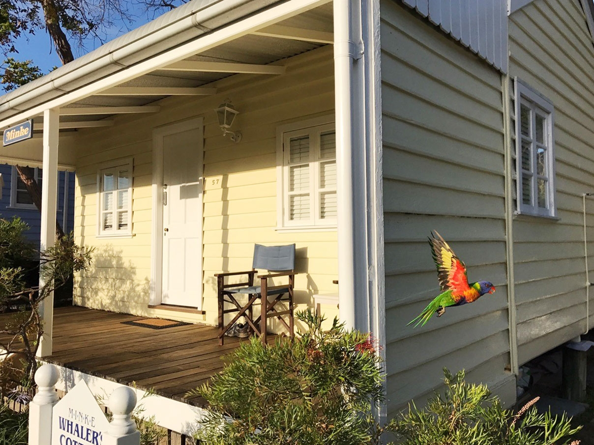 Rainbow lorikeets fly around a small yellow house