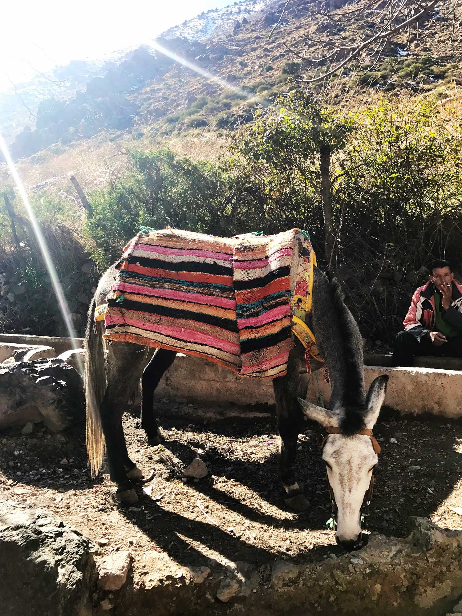 A donkey with a colourful rug on its back stands by the base of a mountain