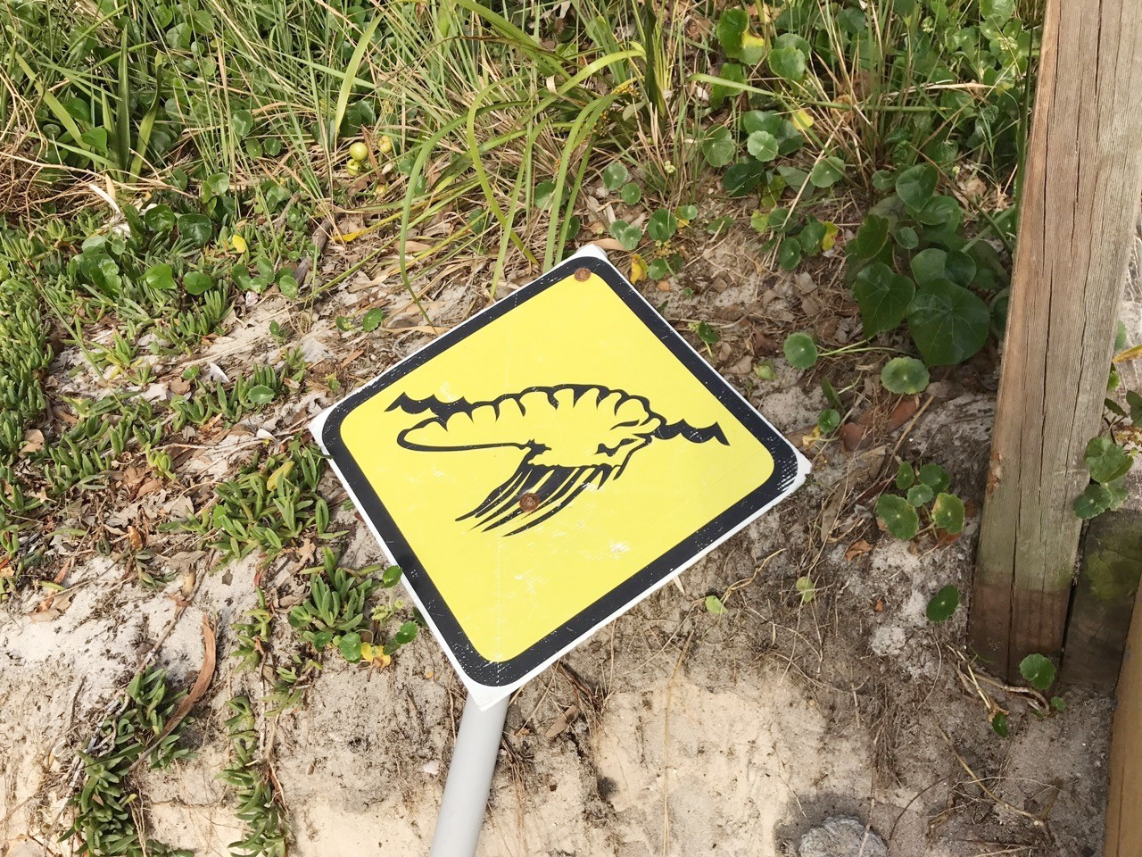 Bluebottle jellyfish warning sign