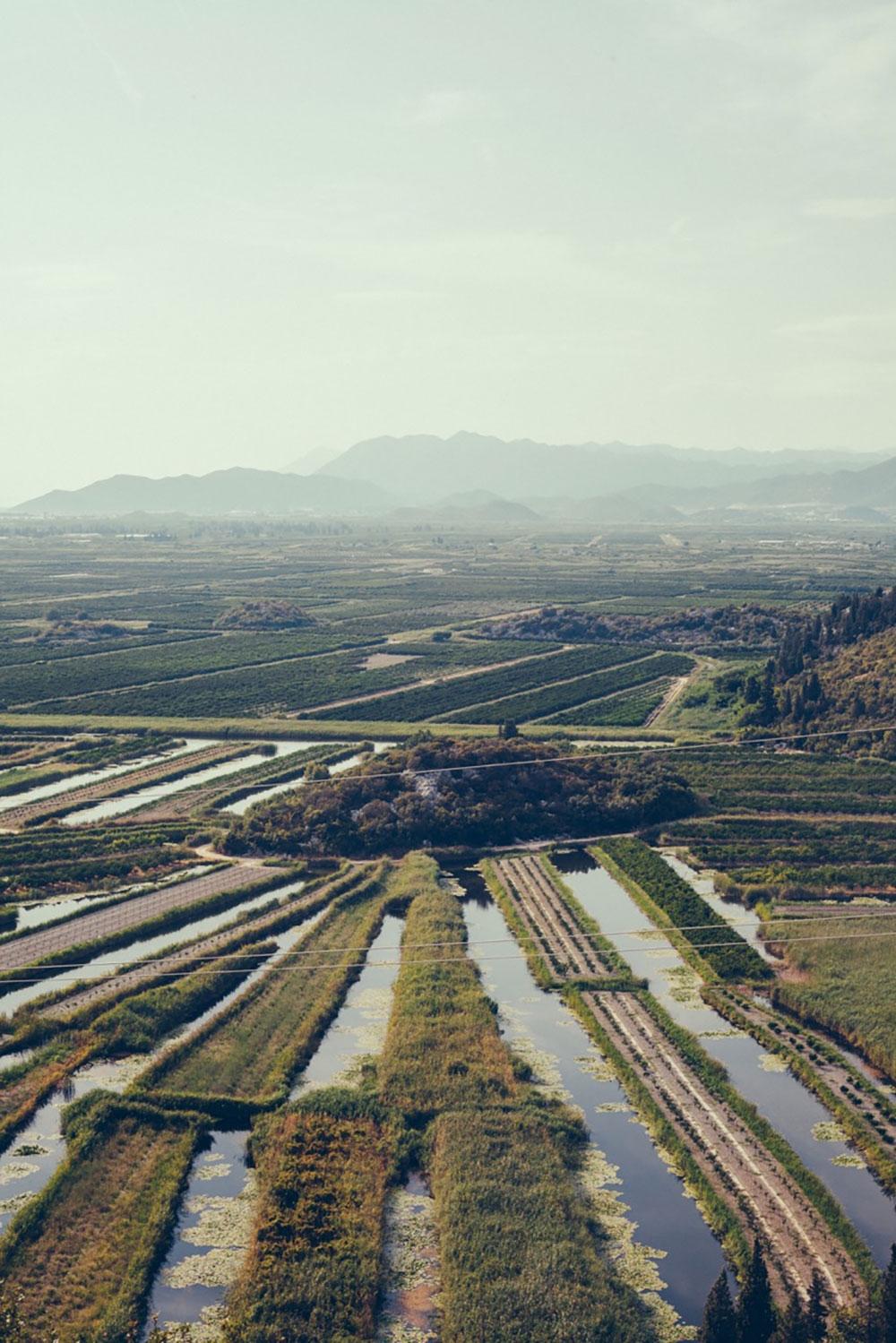 Fields of green – Dalmatian Coast