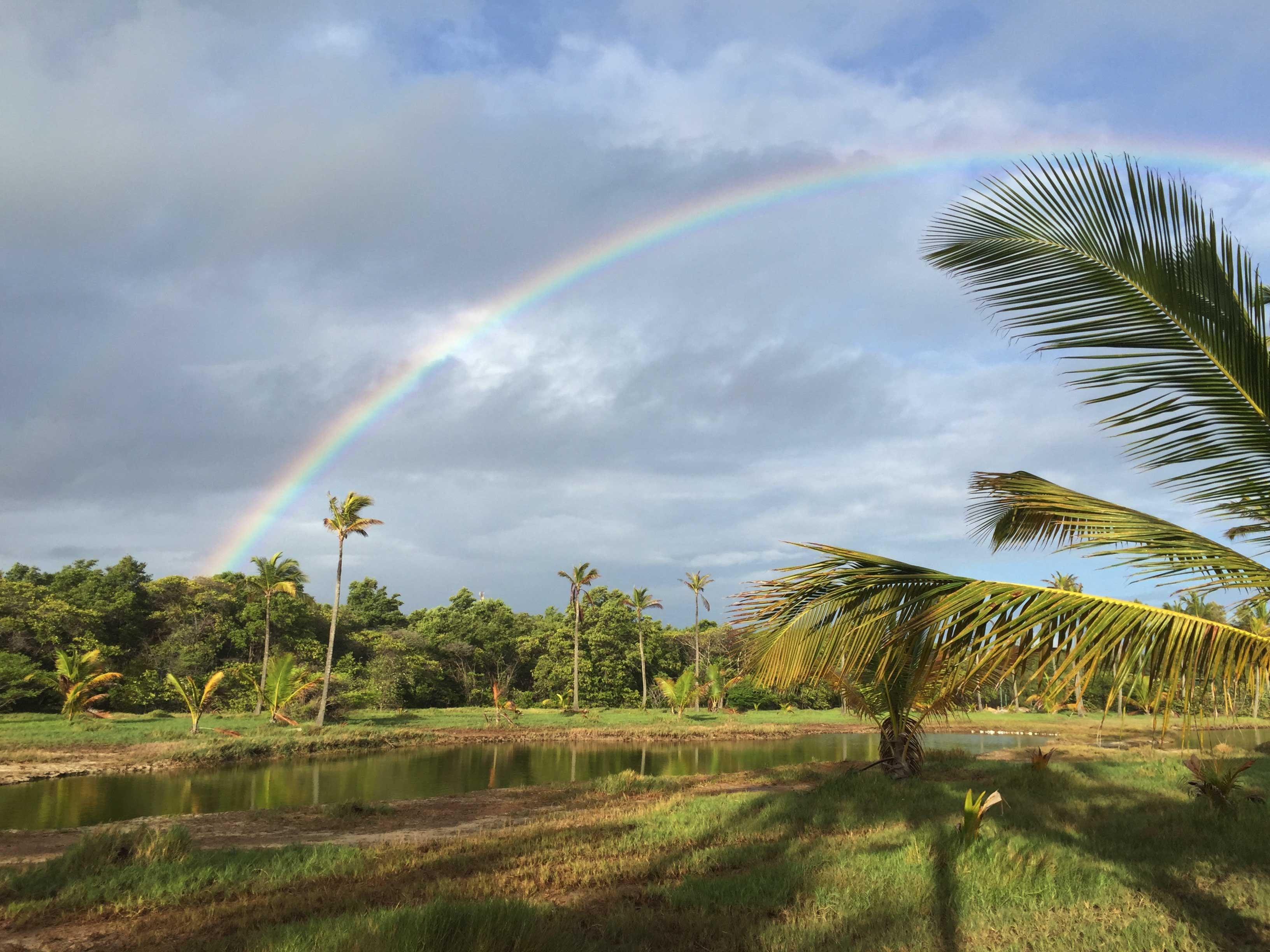 A rainbow stretches over a grass field