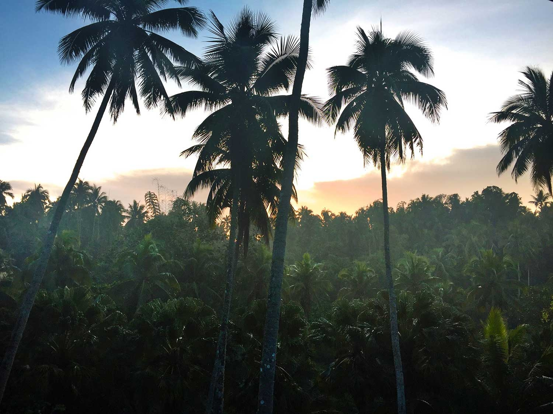 The sun rising over the jungle