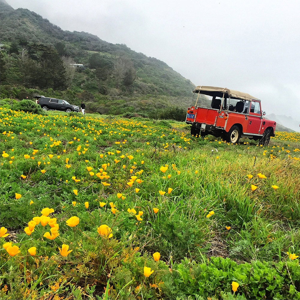 A red jeep is parked in the clouds on a mountain with green grass and yellow flowers
