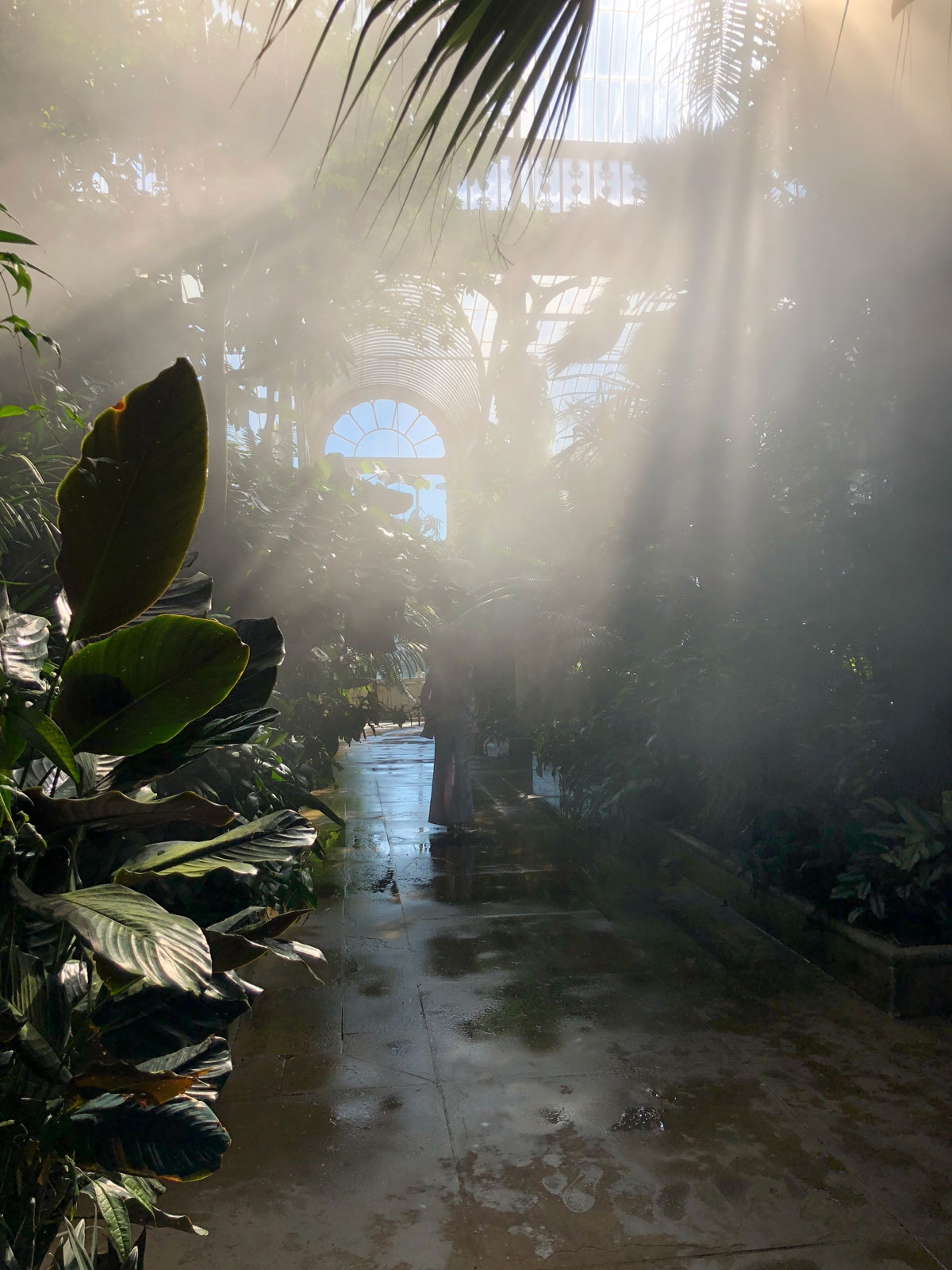 The sun shines through the glass ceiling onto dense plantations in Kew Gardens