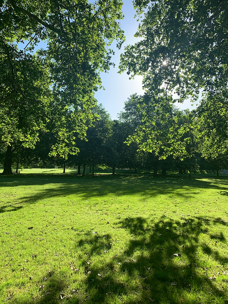 The sun shining over a lush green park on an English summer's day