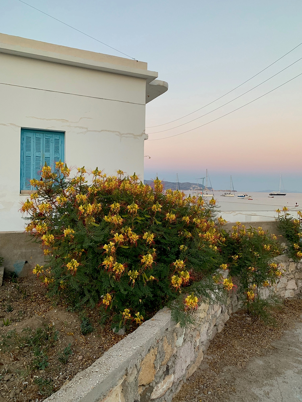 Native flora lines the foreground, while the sun sets over the boats and houses around the island.