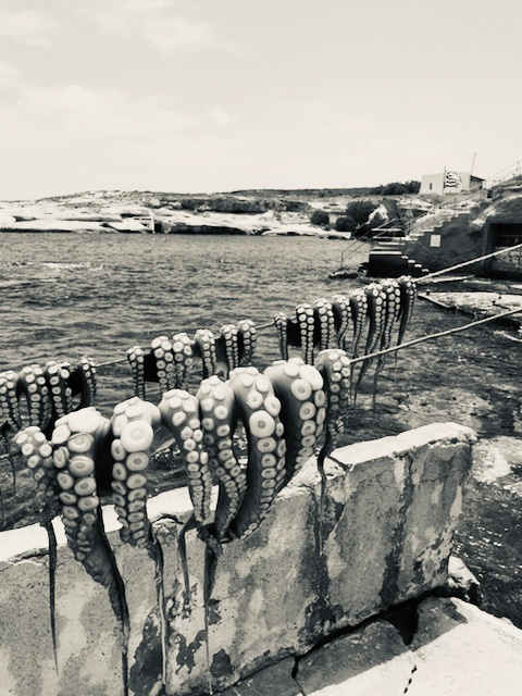A black and white image of the Milos coast with two strings of octopuses drying in the sun.