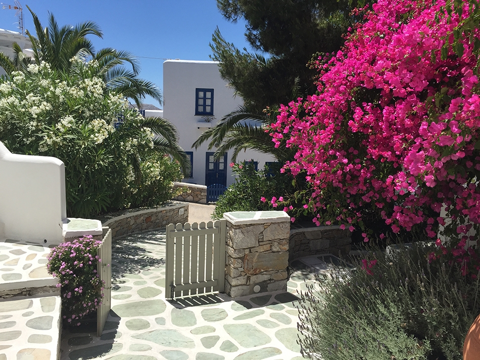 A large stone path leads to a white house with bright blue windows and doors, nestled within an abundance of greenery and bright pink flowers