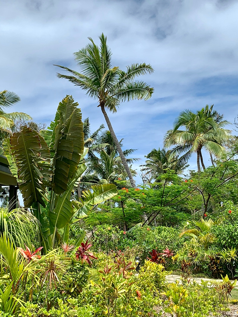 Lush tropical gardens filled with native plants