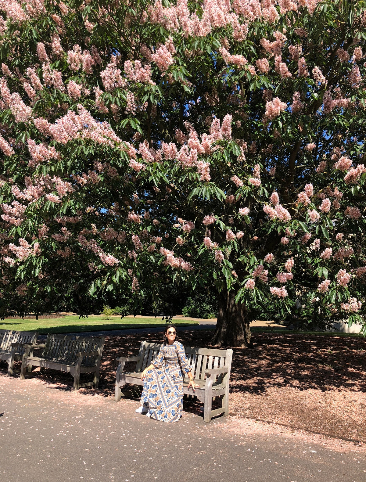 Nicky Zimmermann sitting on a bench under a large flowering tree in Kew Gardens