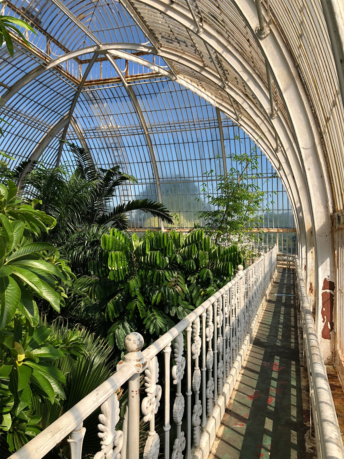 The interior of the Palm House Kew Gardens from a balcony amongst the tree-tops. June 2018