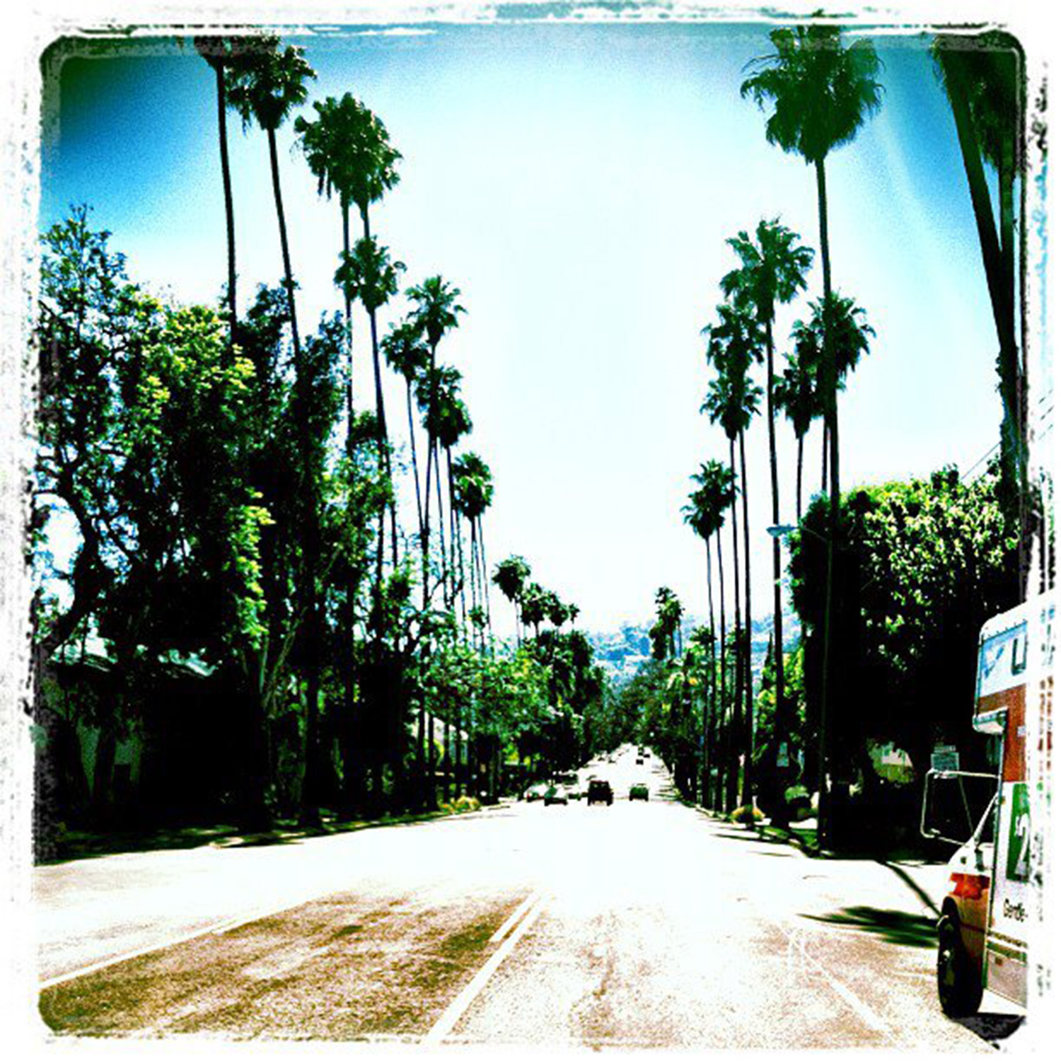 Palm trees line the streets of Los Angeles, July 2012