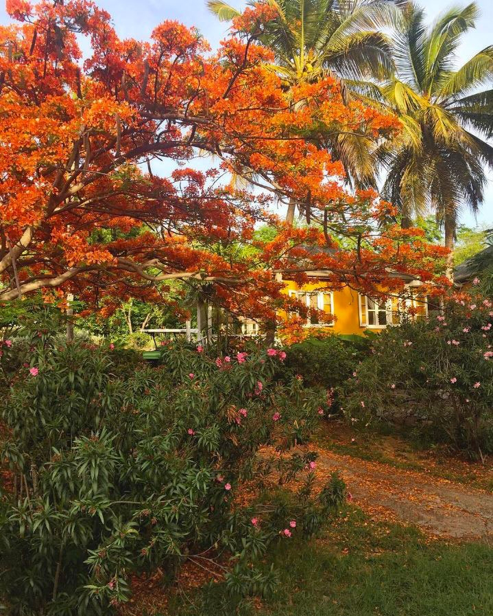 Bright orange flowers and tropical plants on the island