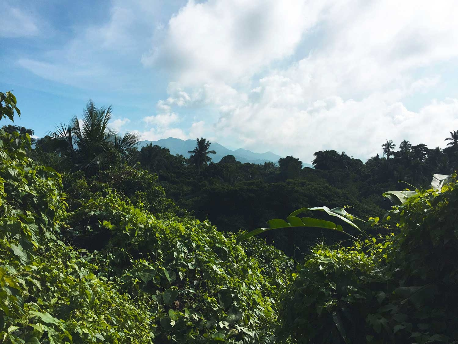 Looking out over the treetops at Mount Malarayat
