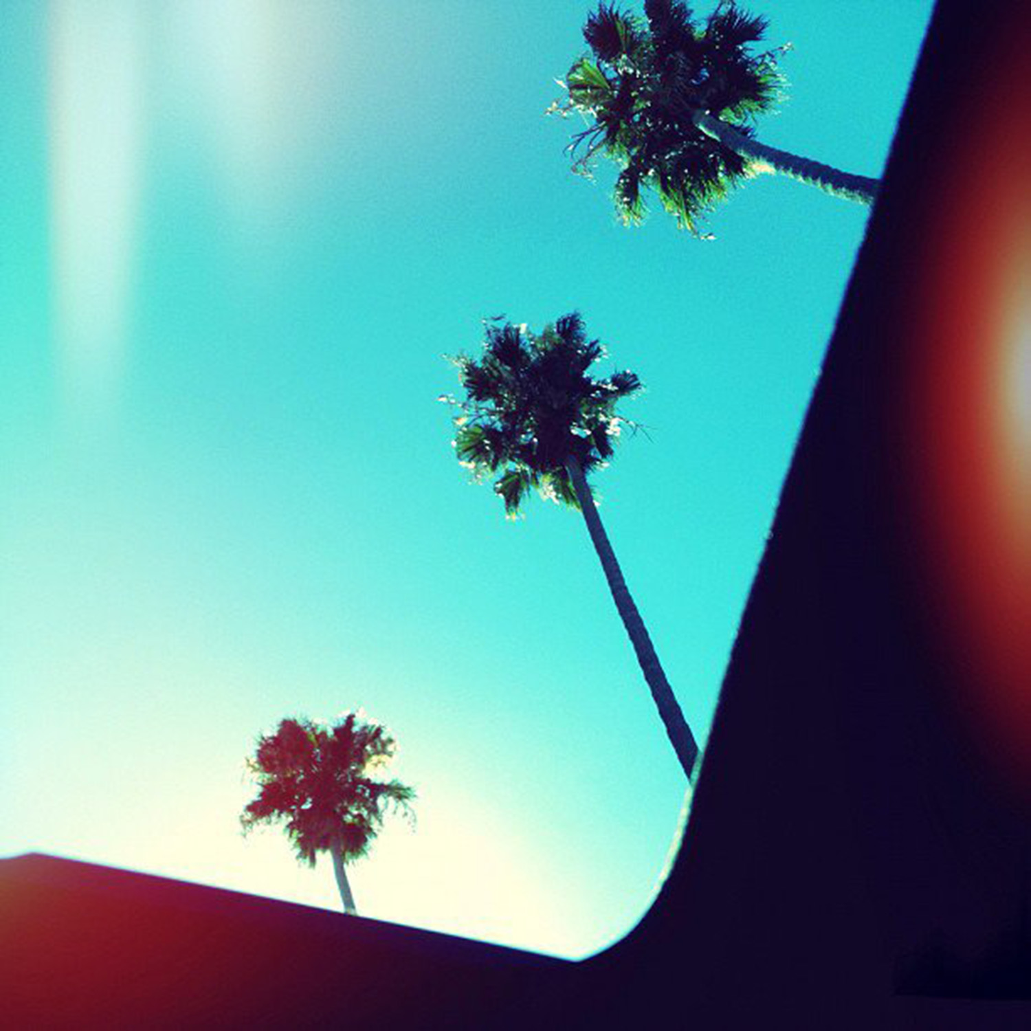 Looking up at the tall palm trees and clear blue sky, July 2012