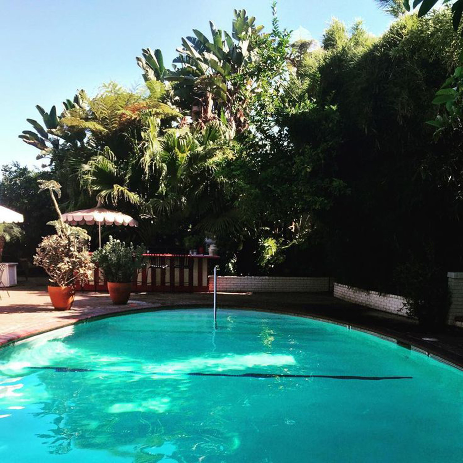 The pool at Chateau Marmont is surrounded by a thick garden and tall hedges
