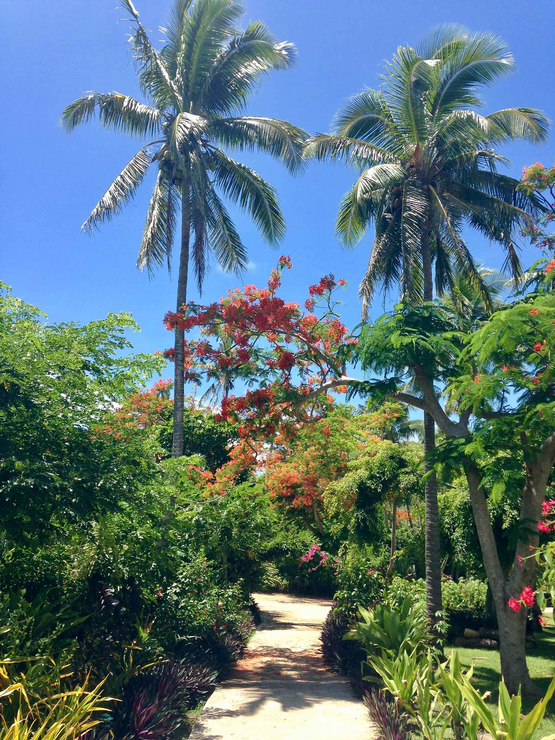 Walking through the lush green garden, surrounded by tall palm trees and blooming flowers