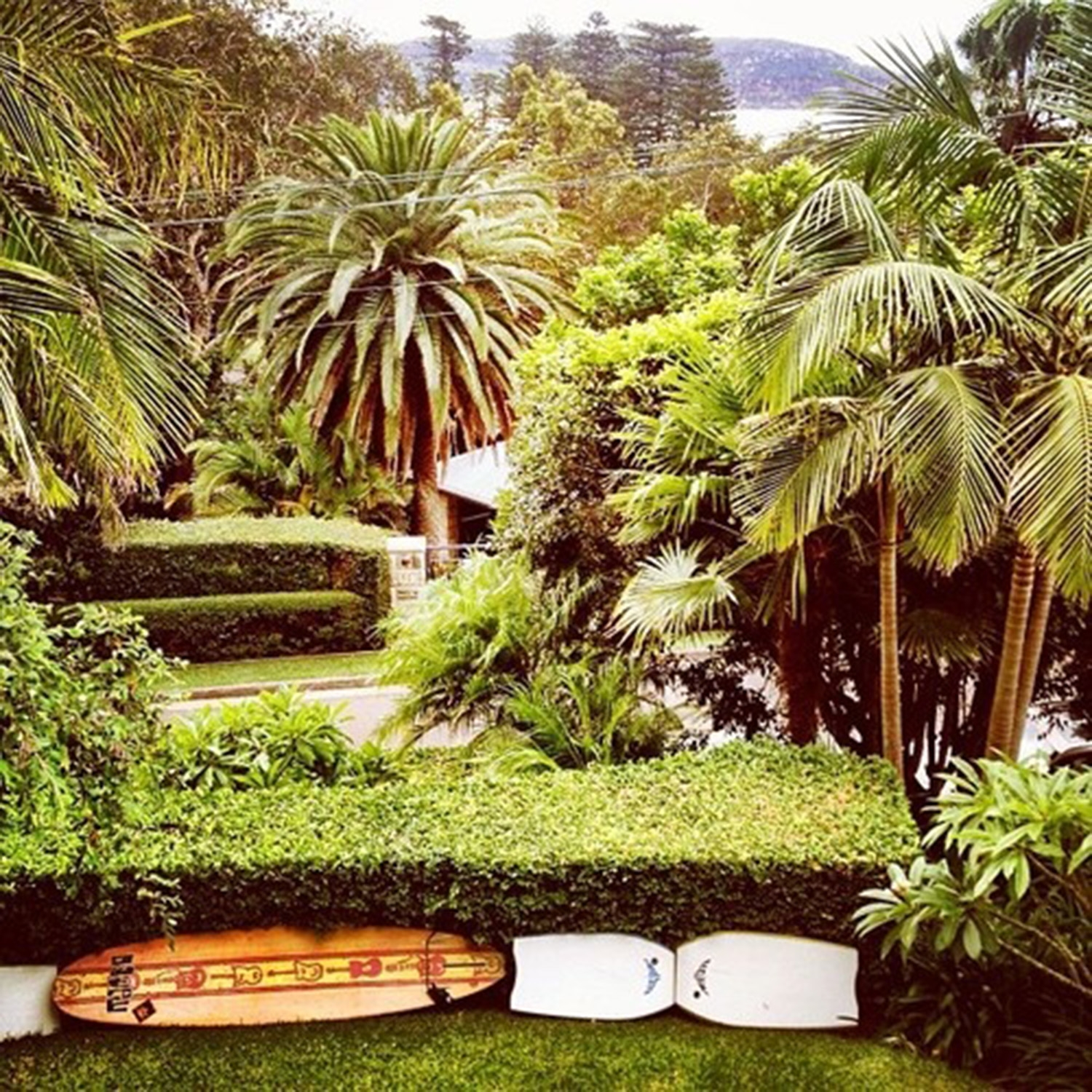 Tall palm trees, manicured hedges, a surfboard and boogie boards sit in the front garden of Barrenjoey Villa