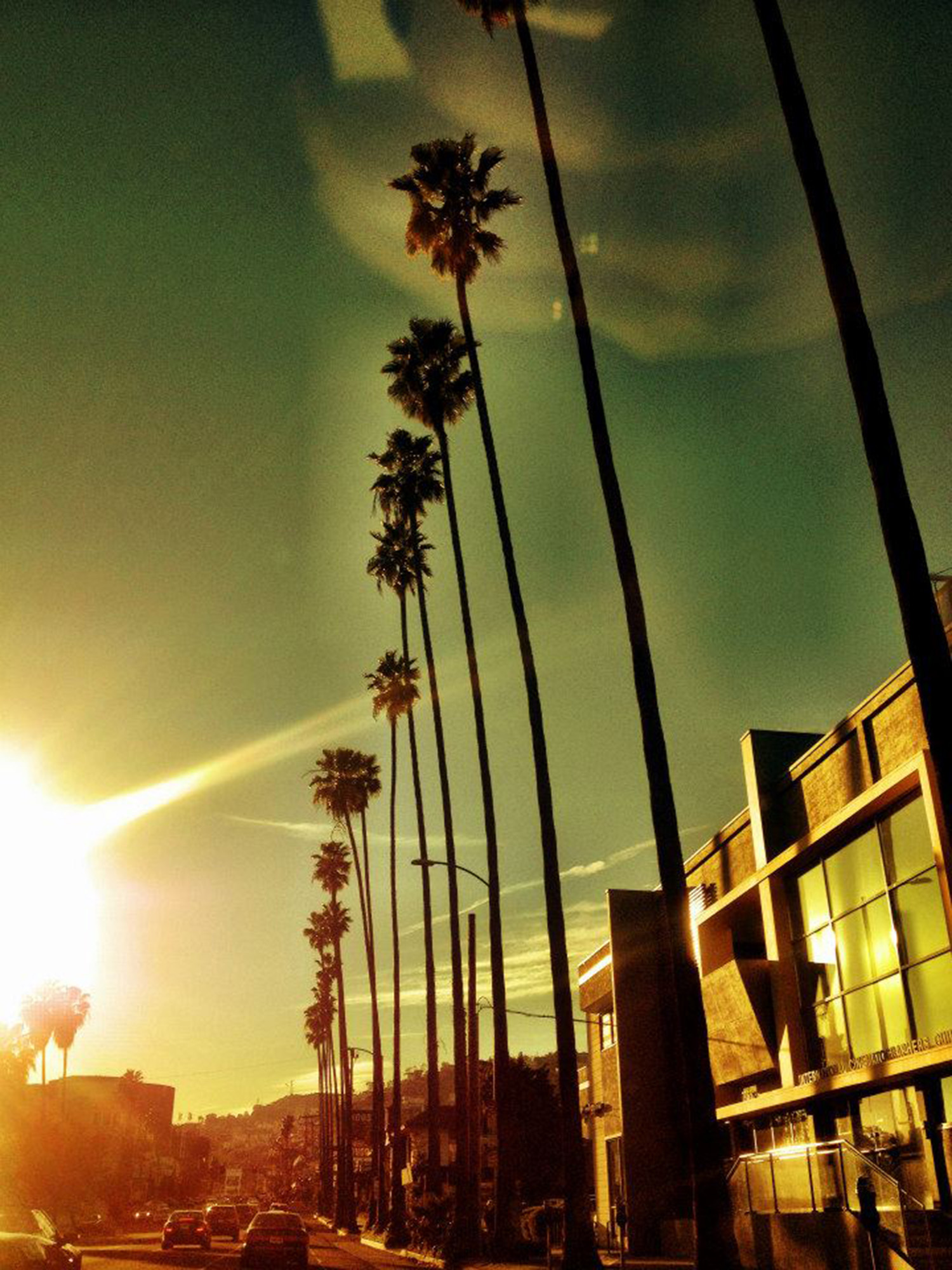 The tall palm trees along the streets of LA