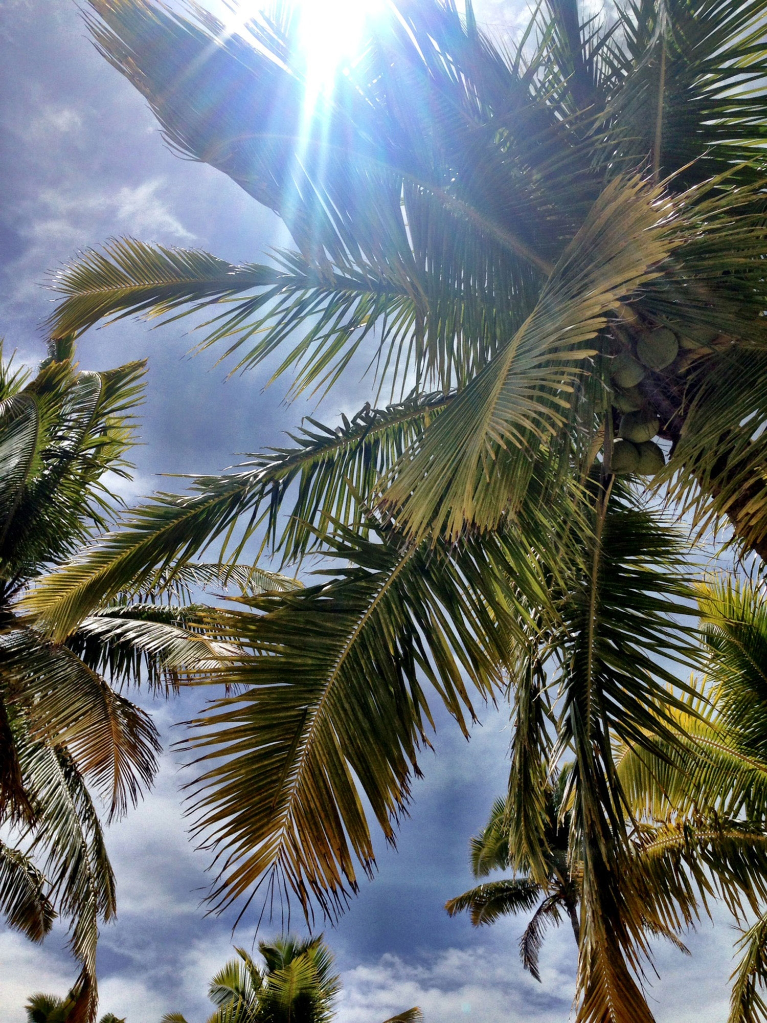 Looking up past palm fronds to the bright sun and blue sky