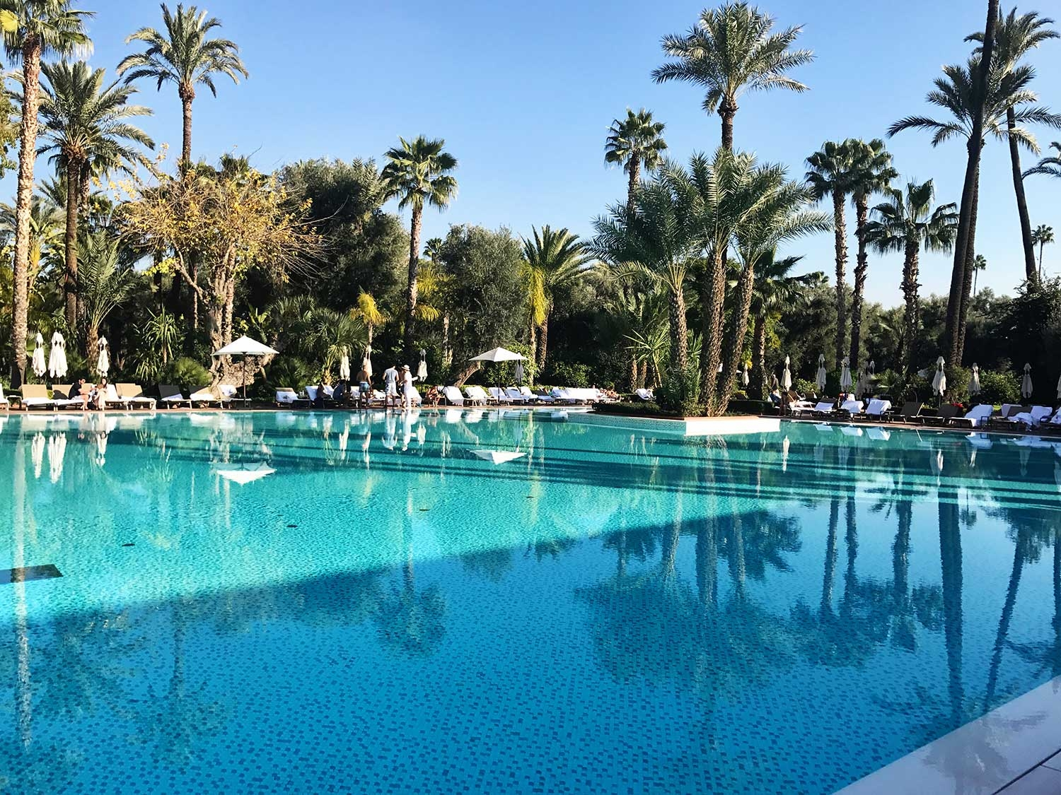 The vast, oasis like pool of La Mamounia
