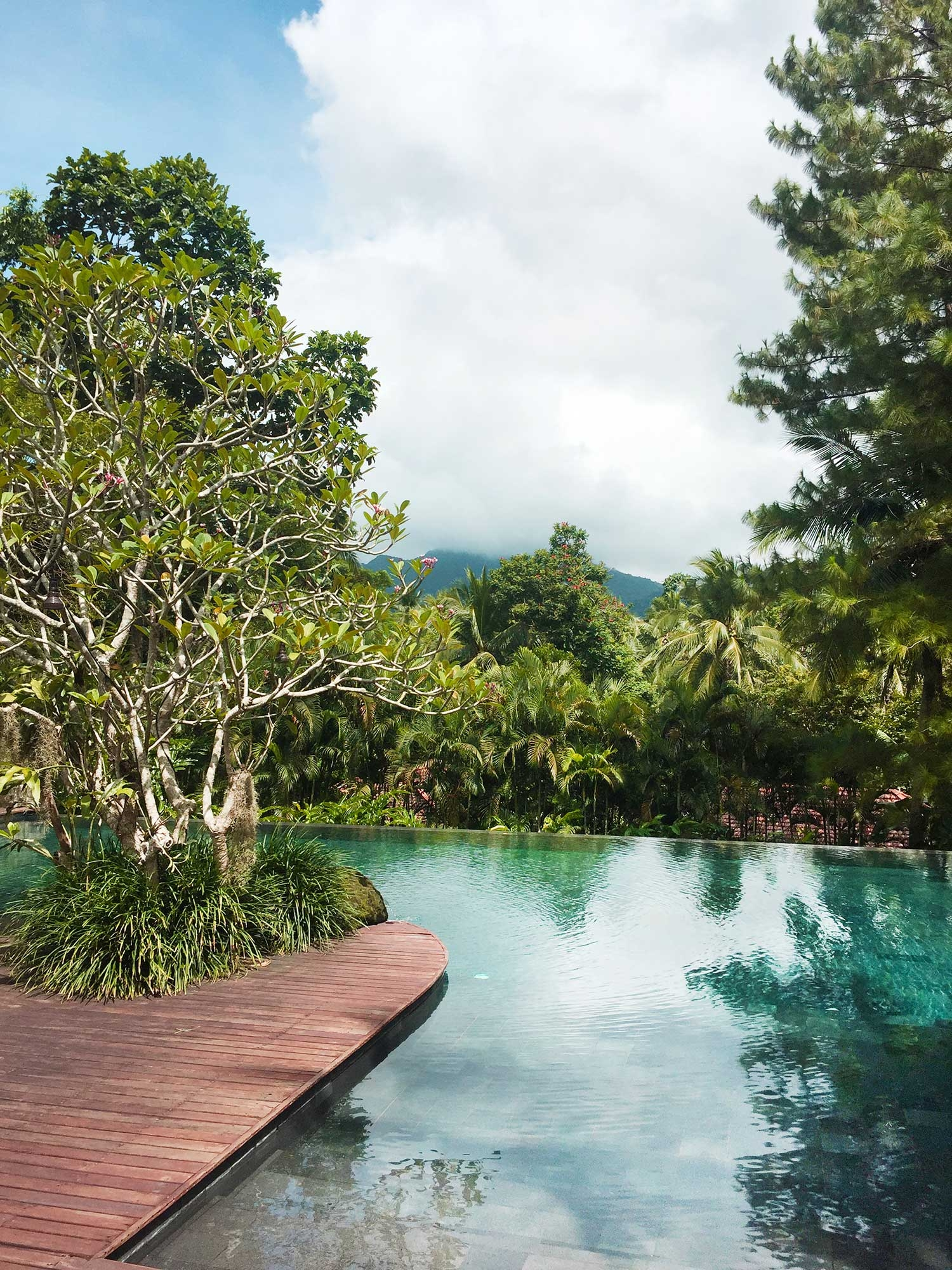 An ancient frangipani tree sits beside a large pool overlooking the nearby jungle and mountains